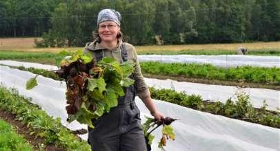 Příprava zeleniny pro podílníky